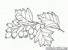 coloring page espinheiro alvar