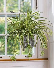 Best Plants For Low Light Terrarium 15 Best Low Light Indoor Plants