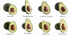 Different Types Of Avocado Types Of Avocados And How They Differ Avocado Types