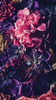 floral wallpaper for iphone 8 plus 5 floral iphone wallpapers to celebrate 65k