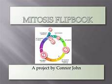 Cell Cycle Flip Book Mitosis Flipbook