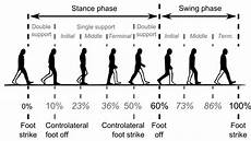 Gait Cycle Common Temporal Divisions Of The Gait Cycle Download