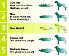 Dog Weight Chart Calculator Ottawa Valley Dog Whisperer Is Your Dog Overweight