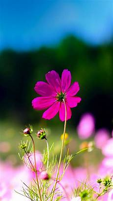 phone flower wallpaper apps tap and get the free app creative flower nature macro