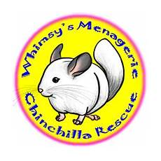 cage accessories whimsy s menagerie chinchilla rescue