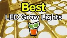 Lemon Best Lights Best Cheap Led Grow Lights For Cannabis Tomato Carrot