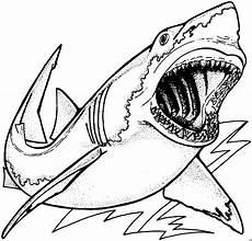 gefaehrlicher hai 2 ausmalbild malvorlage tiere