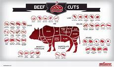 Beef Cuts Chart Beef Cuts Infographic Chart Showing The Various Types Of