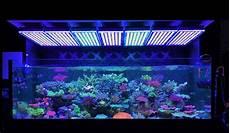 Saltwater Fish Tank Lights Amazing Japanese Reef Tank Under Atlantik V4 Led Lighting