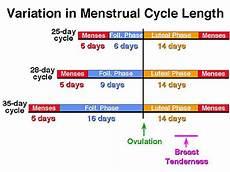 24 Day Menstrual Cycle Chart Calendar Based Methods