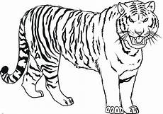 drawing pictures of tigers at getdrawings free