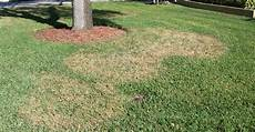 Brown Patch Fungus Gainesville Lawn Pest Of The Month Large Patch Fungus