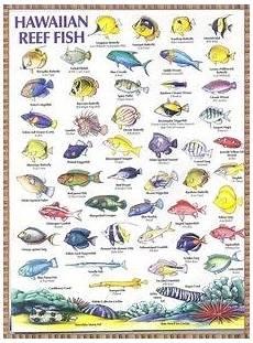 Reef Fish Identification Chart Hawaiian Reef Fish Chart Fish Chart Hawaiian Art Hawaiian