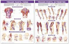 Travell Trigger Point Chart Trigger Point Anatomical Chart Set Torso Amp Extremities