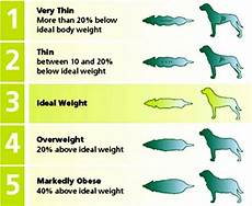 Ideal Weight For Dogs Weight Chart Ideal Chinese Crested Weight