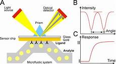 Surface Plasmon Resonance Sensors Free Full Text Toxin Detection By Surface