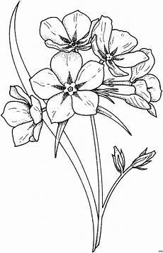 Malvorlagen Blumen Gratis Stengel Mit Blume Ausmalbild Malvorlage Blumen