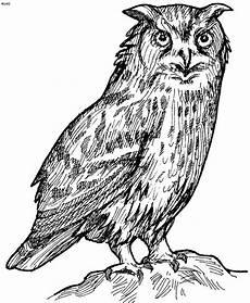 Free Owl Coloring Pages Owl Coloring Pages Free Printables Tthe Huns Yellow