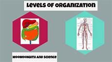 Levels Of Organization Levels Of Organization In Biology Youtube
