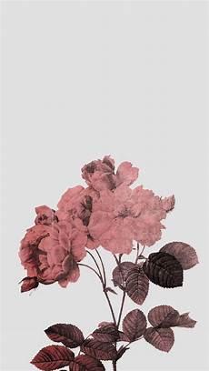 Aesthetic Flower Wallpaper Iphone by Gods Persephone Kertas Dinding Wallpaper Ponsel Dan