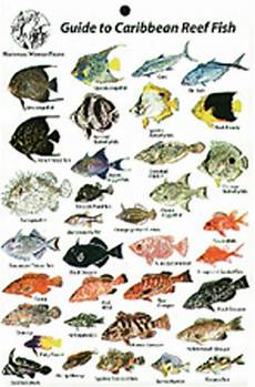 Reef Fish Identification Chart Guide To Reef Fish Caribbean Id Card Travel 6x9 New Bk13