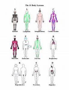 11 Body Systems Body Systems Webquest