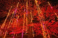 Mis Light Show Illumination Tree Lights At The Morton Arboretum