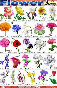 Flower Chart With Names And Pictures Flower Identification Flower Chart Flower