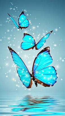 Butterfly Wallpaper For Iphone 6 Plus by Hd Iphone 6 Wallpapers Wallpaper