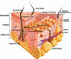 Integumentary System Diseases Integumentary System Home