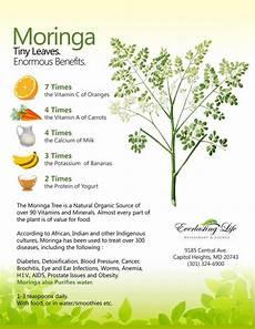 Moringa Chart Moringa Health Charts Pinterest Dr Oz Level And