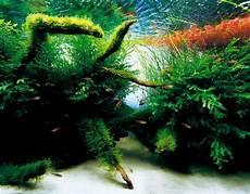 ada aquascape blogpreketek ada nature aquarium aquascape