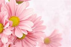 Floral Backgrounds Soft Pink Floral Background Gallery Yopriceville High