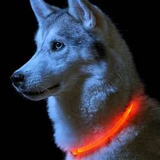 Dog Led Light Led High Visibility Dog Collar Auraglow Led