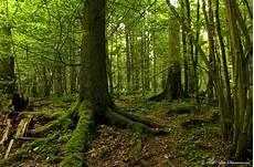 Malvorlagen Urwald Europa Im Letzten Urwald Europas 2 Foto Bild Landschaft Wald