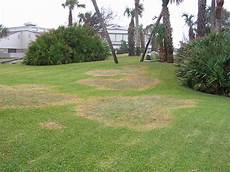 Brown Patch Fungus Are Lawn Circles Brown Patch Fungus Massey Services Inc