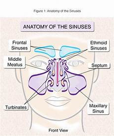 Sinus Anatomy Sinusitis Treatment And Surgery Nyc