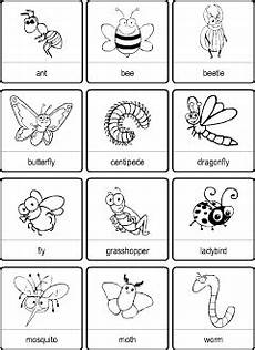 Insects Vocabulary For Kids Learning English Printable