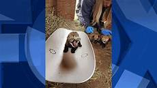 Kptv Friday Night Lights New Litter Of Cheetah Cubs Welcomed At Oregon Wildlife