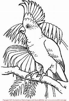 pin gubik auf birds coloring vogel malvorlagen