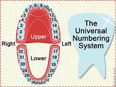Tooth Number Chart Adults Dental Charts To Help You Understand The Tooth Numbering