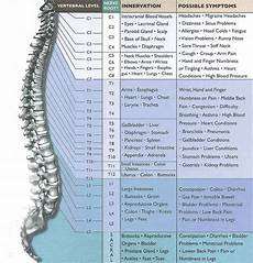 Chart Of Nerves In Back Living A Healthy And Pleasure Life Spinal Cord Injury