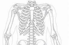 organi gabbia toracica costola incrinata cause e rimedi tingweb