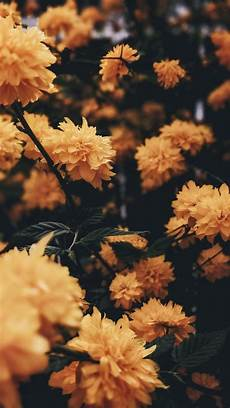 iphone wallpaper nature flowers yellow flowers nature background iphone aesthetic iphone