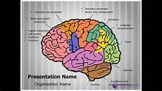 Brain Ppt Templates Brain Function Powerpoint Presentation Template