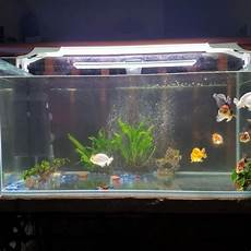 3 Foot Fish Tank Light Aquarium 3 Feet Fish Tank On Carousell