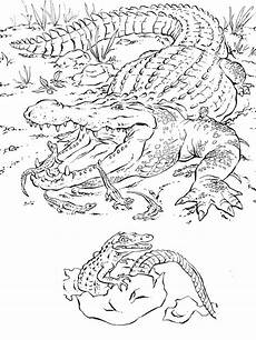 realistic coloring pages of animals coloring home