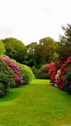 Flower Wallpaper Garden by 1080x1920 Flowers Grass Garden Wallpapers Hd Desktop