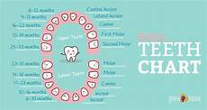 Baby Teeth Chart Letters Baby Teething Chart What Order Do They Come In Mama