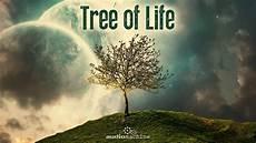 Life Of A Recruiter Audiomachine Tree Of Life Full Album Hq Youtube